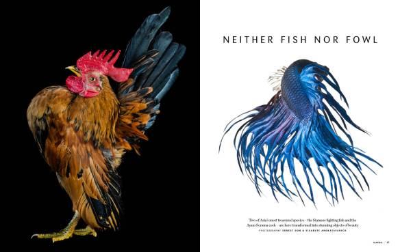 Cock and Fish Photo Essay-JH_RW