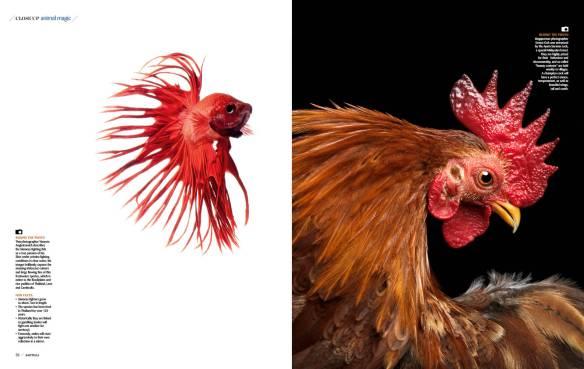 Cock and Fish Photo Essay-JH_RW2